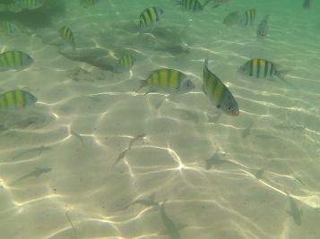 Snorkeling na Lading Island