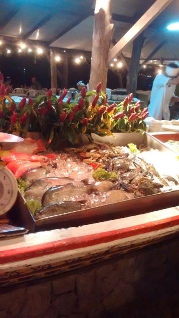 Ko Phi Phi - peixes expostos para consumo