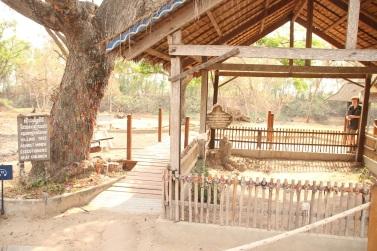 Árvore onde as crianças eram mortas no Killing Field of Choeung Ek