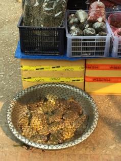 Morning Market - sapos vivos