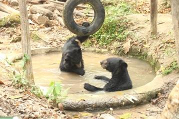 Ursos pretos resgatados