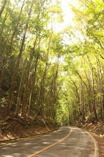 Mahogany Forest