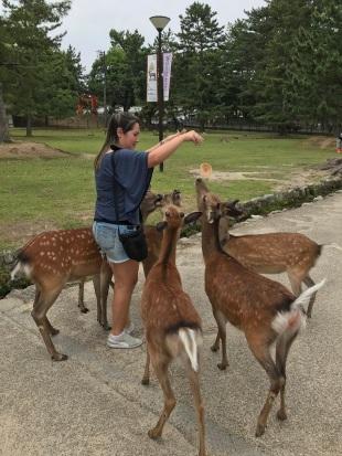 Tentativa de alimentar os animais