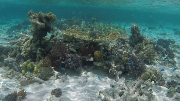Snorkel - água cristalina