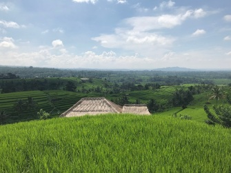 Terraço de arroz Jatiluwih