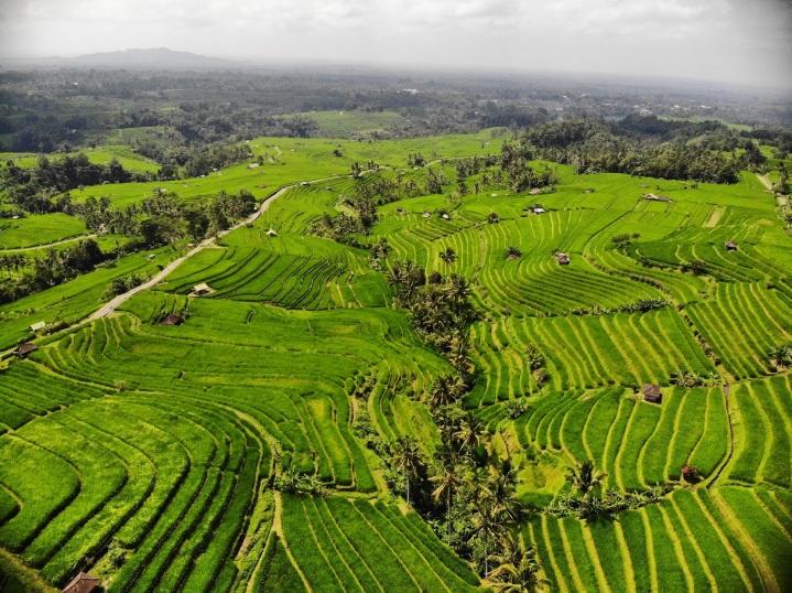 Terraço de arroz Jatiluwih - foto do drone